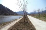 삼장면 '고향의 강' 산책로 꽃길 조성
