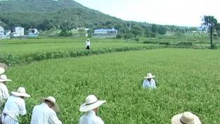 전승 사각지대에 놓인 한국 민속의 뿌리 지킨다