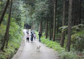 피톤치드 내뿜는 옥종 편백 숲길 걸어요